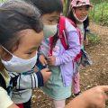 """【自然保育セミナー⑥】子ども達の""""なにこれ?""""に寄り添う(2) 〜どんぐりの可能性〜"""